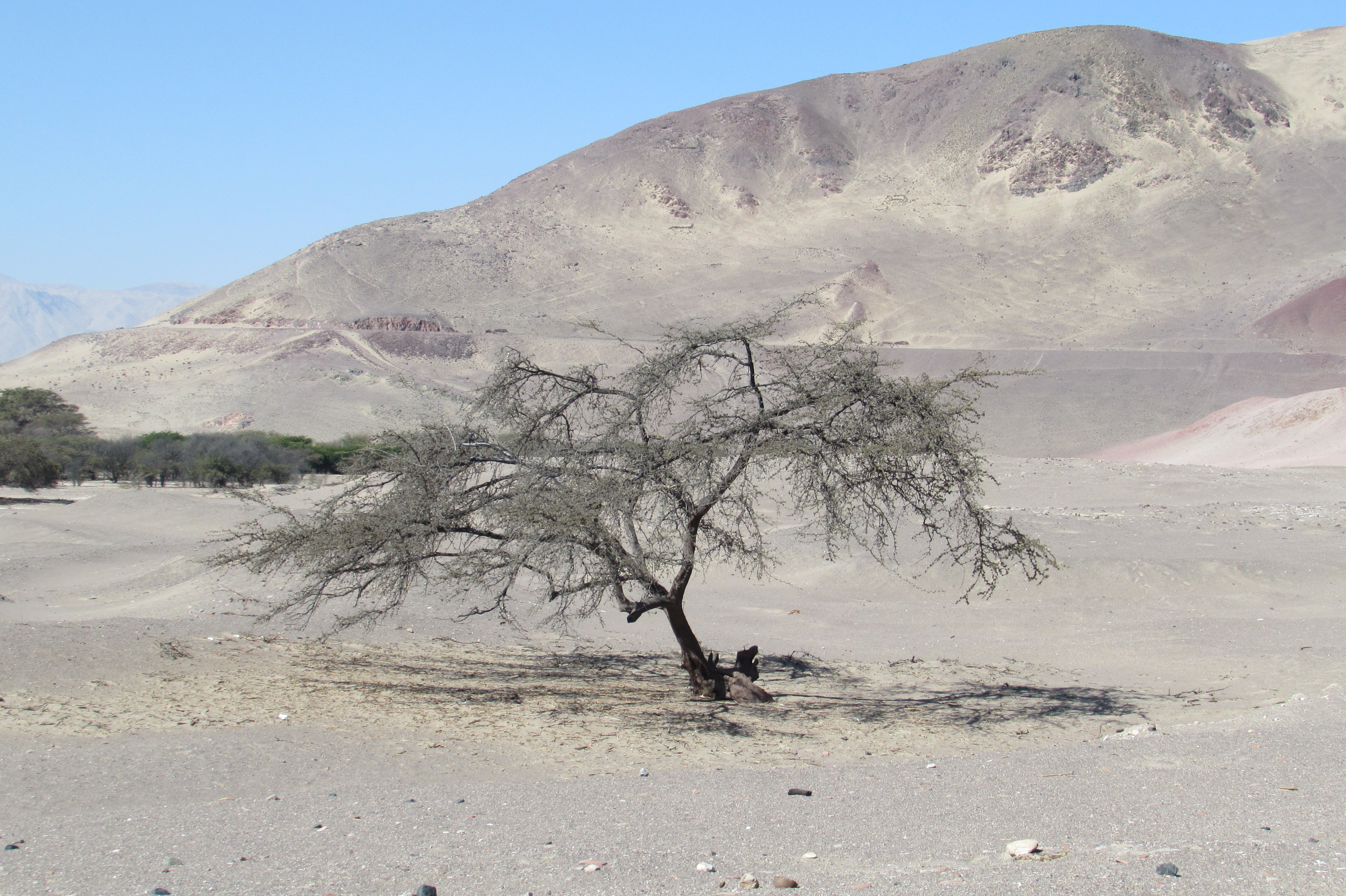 A lonely worker near the Nasca Lines
