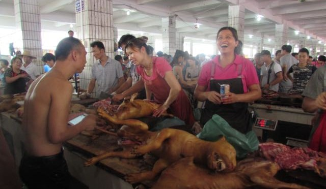 玉林狗肉节 The Yulin Dog Meat Festival
